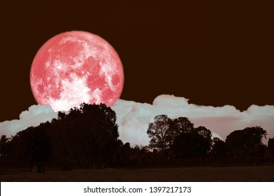full hay moon on night sky back over silhouette forest, Elements of this image furnished by NASA