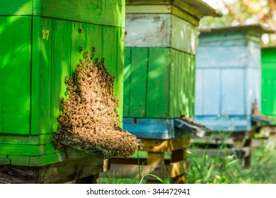 Full of honey beehives with bees in garden