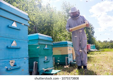 Full length portrait of modern young beekeeper collecting honey from hive, checking hive frames with bees, copy space