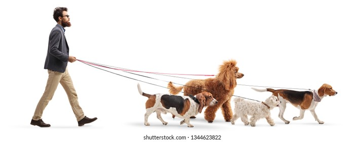 Full length profile shot of a male dog walker walking four different dogs isolated on white background
