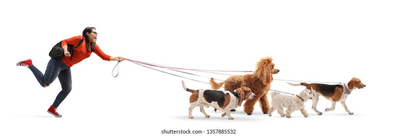 Full length shot of a female student dog walker with a maltese poodle, red poodle, beagle and basset hound dog isolated on white background