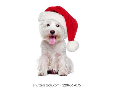 Full length of white west highland terrier wearing Christmas hat