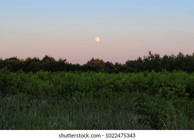 Full moon above mystic forest and bushes. Green thick grass in the evening, blue and pink sky.