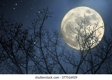 Full moon behind naked tree branches in a starry night