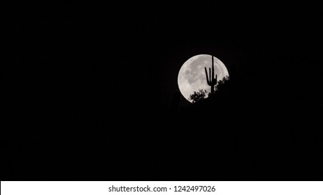 The full moon behind a silhouette of an iconic southwestern plant, the saguaro cactus with creosote bushes. Giant moonset on a desert mountain ridge top. Pima County, Tucson, Arizona. 2018.