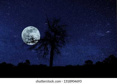 Full Moon With Galaxy, landscape with silhouette of tree