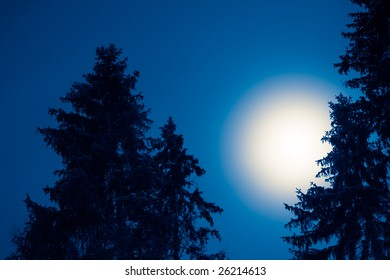 Full moon over conifers at night, toned black and white