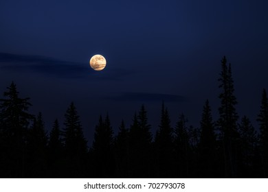 Full Moon Over the Forest