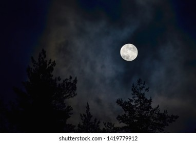 full moon over the forest, South Bohemia, Czech Republic