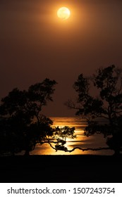Full moon over an ocean beach on mangrove flats reflecting the moonlight, framed by silhouetted trees