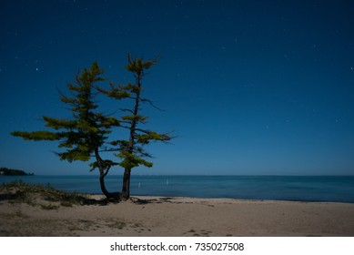 A full moon reveals an isolated Lake Michigan beach with 2 pine trees overlooking the calm water.