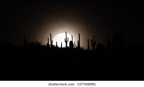 The full moon setting behind saguaro cacti on a mountain top in the Sonoran Desert. Beautiful moonset with cactus in silhouette. Southwestern landscape with a beautiful background. Tucson, Arizona.