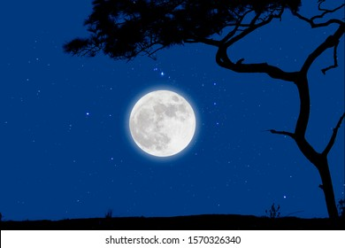 Full moon in starry night over grass with tree.