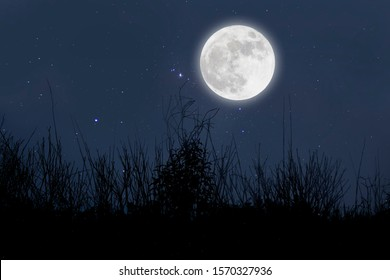 Full moon in starry night over grass.