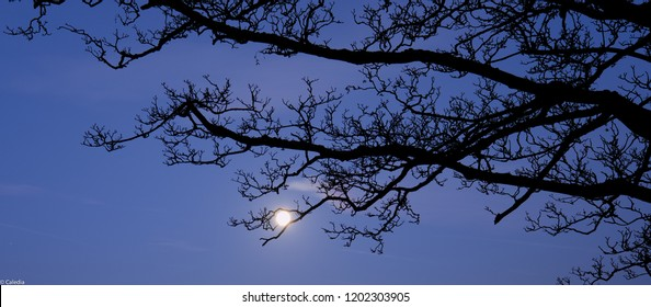 Full moon through winter branches, Harrington, Northamptonshire, United Kingdom
