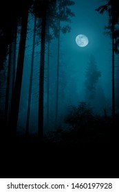 Full over the spruce trees in magic mystery night foggy forest. Halloween backdrop.
