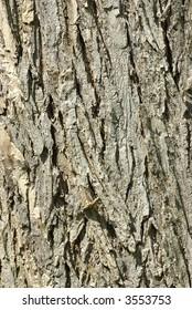 Full (portrait) frame closeup of Oak Bark.