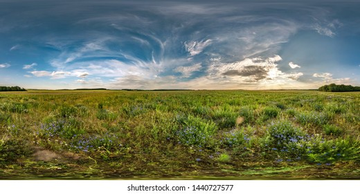full seamless spherical hdri panorama 360 degrees angle view among cornflowers fields in summer evening sunset with beautiful clouds in equirectangular projection with complete zenith