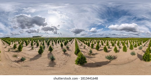 full seamless spherical hdri panorama 360 degrees angle view on plantation of young conifers in greenhouse with a lot of plants in equirectangular projection. VR  AR content
