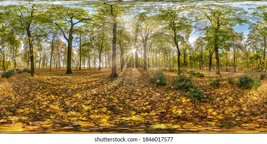 full seamless spherical hdri panorama 360 degrees angle view in beautiful autumn forest or park with bright sun shining through the trees in equirectangular projection, ready VR AR content