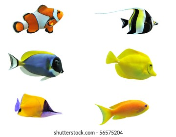 full side view of tropical fish isolated on white