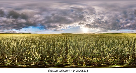 full spherical seamless hdri panorama 360 degrees angle view among rye and wheat fields in summer evening sunset with awesome clouds in equirectangular projection, ready VR AR virtual reality content