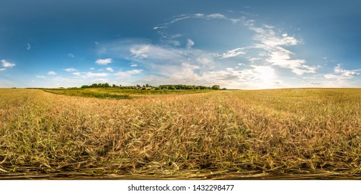 full spherical seamless hdri panorama 360 degrees angle view among ears of barley, rye and wheat fields in evening sunset with clouds in equirectangular projection, VR AR virtual reality content
