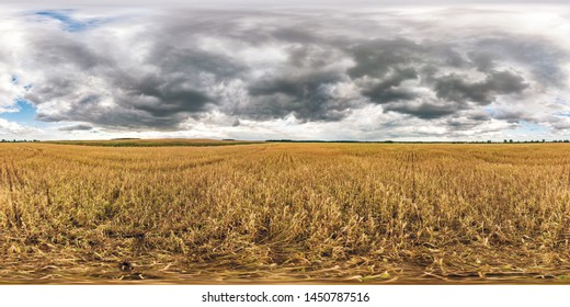 full spherical seamless panorama 360 degrees angle view among rye and wheat fields in summer evening sunset
