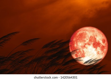 full strawberry moon on night red sky back silhouette grass flowers, Elements of this image furnished by NASA