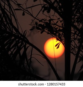 Full sun with sunset sky, sunset today and sunset tonight,Silhouette coconut palm trees on beach at sunset.