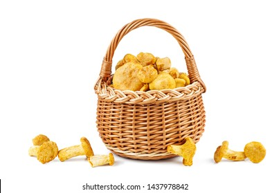 Full wicker basket with fresh chanterelle mushrooms isolated on white background