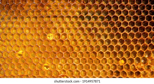 Full-frame view of background texture and pattern of a section of wax honeycomb from a bee hive filled with golden honey. banner.