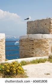 A full-grown Mediterranean Sea seagull sits on a wall