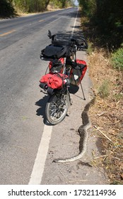 Fully loaded folding bicycle next to a dead big python snake,Thailand