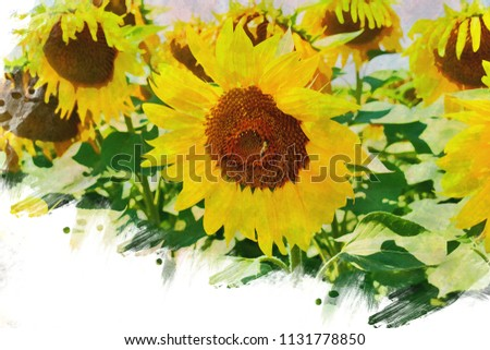 A fully open sunflower. In field of sunflowers on a sunny day.Oil painting effect black/yellow photos