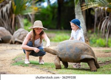 Fun activities in Mauritius. Family feeding giant turtle.