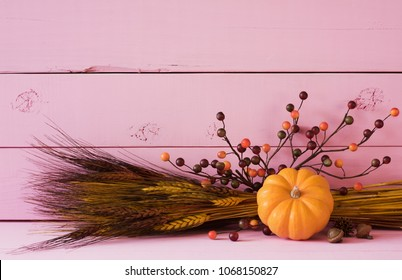 Fun Fall Still Life with Mini Pumpkin, berries and wheat on Bright Pink Shiplap Boards with room or space above for copy, text or your words or design.  It's horizontal with a side angle view