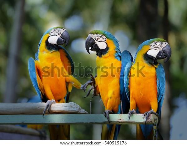 Fun photo with big beautiful macaw parrots