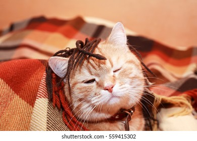 Fun portrait of ginger domestic cat under plaid