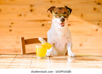 Fun, Vacation and Travel concept — dog with fresh orange juice holding cocktail straw in mouth relaxing in bar