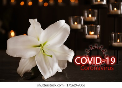 Funeral ceremony devoted to coronavirus victims. White lily and burning candles