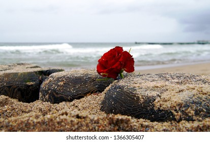Funeral flower, lonely red rose flower at the beach, water background with copy space, burial at sea. Empty place for a text. Funeral symbol and Condolence card concept