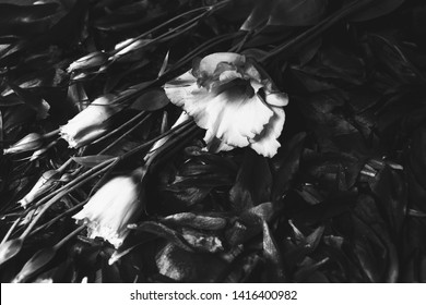 Funeral flowers background. Lisianthus white flowers laying over dark flower petals. Mourning card. Grief loss concept. Black white photo.