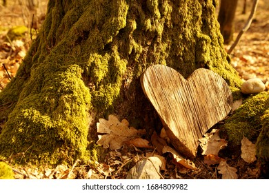 funeral Heart sympathy or wooden funeral heart near a tree. Natural burial grave in the forest. Heart on grass or moss. tree burial, cemetery and All Saints Day concepts