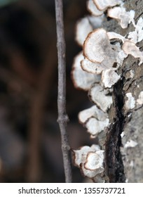 fungi growing on tree branch with blurred background