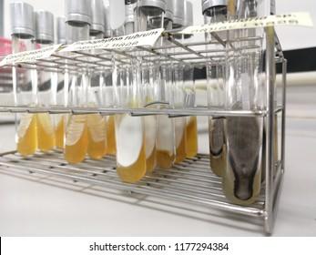 Fungi in test tube