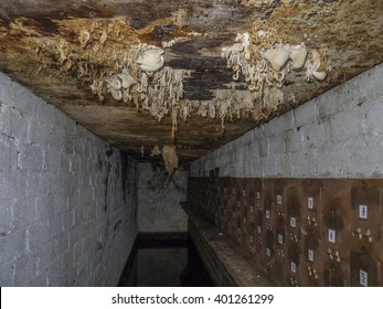 Fungus fruiting bodies on ceiling of damp cellar behind sand martin nest boxes