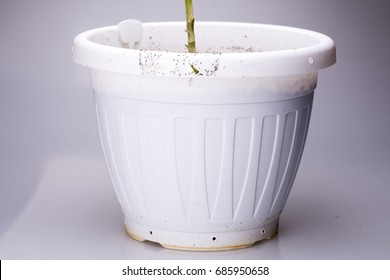 Fungus gnats on sticky tape on white pot