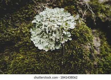 fungus and moss overgrowing rocks