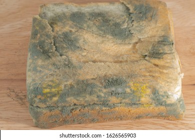 Fungus on the bread,Mold on bread covered with fungus with white background